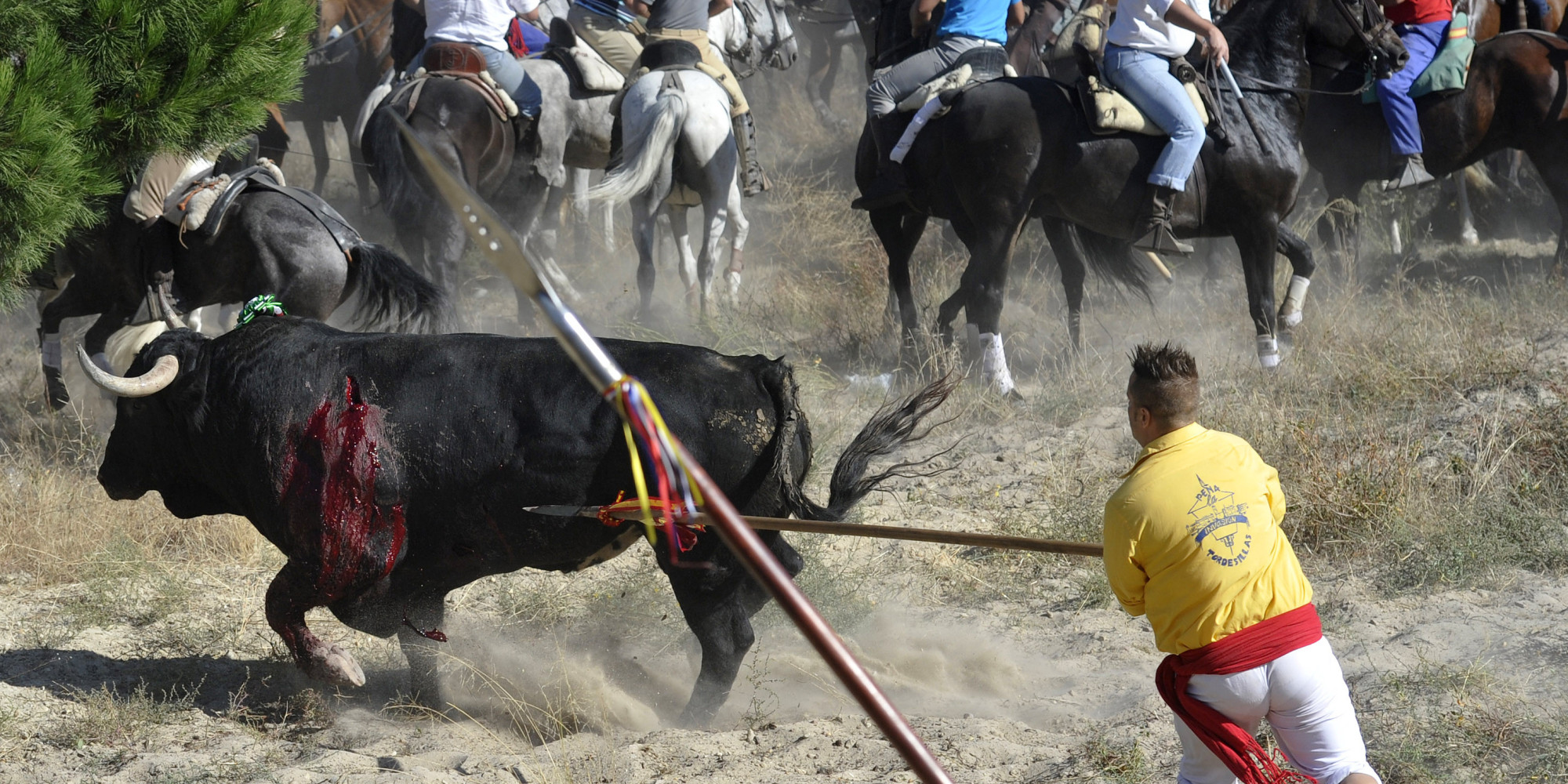 A bull is surrounded by men with spears during the 'Toro de la Vega' bull spearing fiesta in Tordesillas, Tuesday, Sept. 13, 2011.