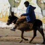 marroquies burro